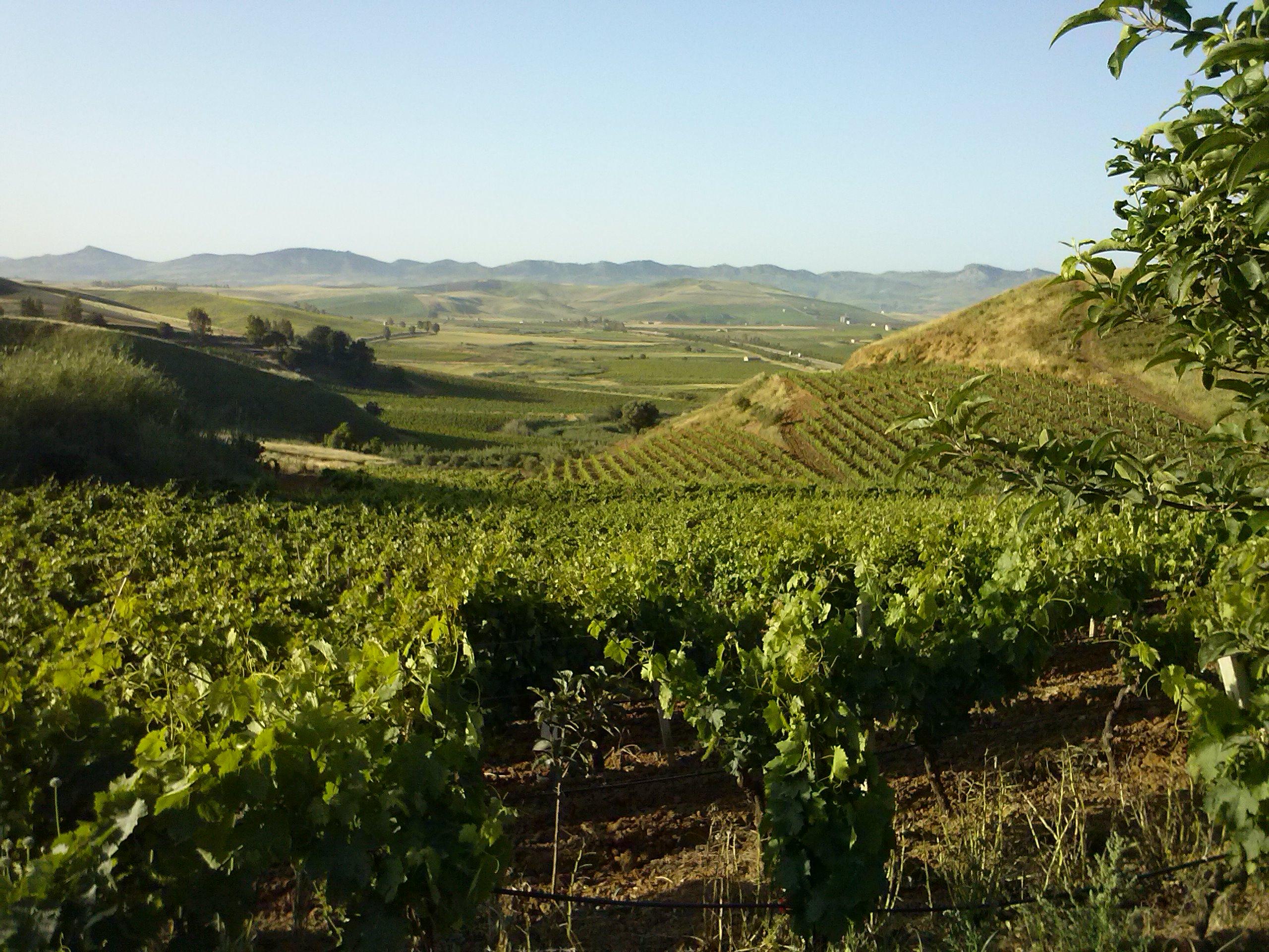 sirignano Sicilia - Biologica Stellino